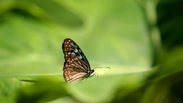 Close-up butterfly on green leaves, 4K.