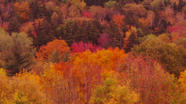 Close-up camera pans across vista of Vermont mountains covered in Fall colors.