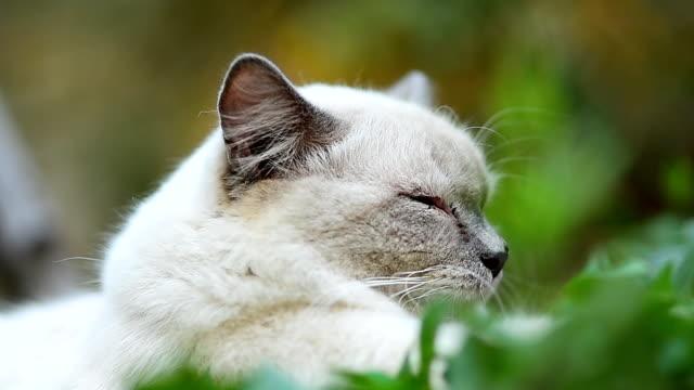 vídeos de stock, filmes e b-roll de close-up de gato - olhos verdes