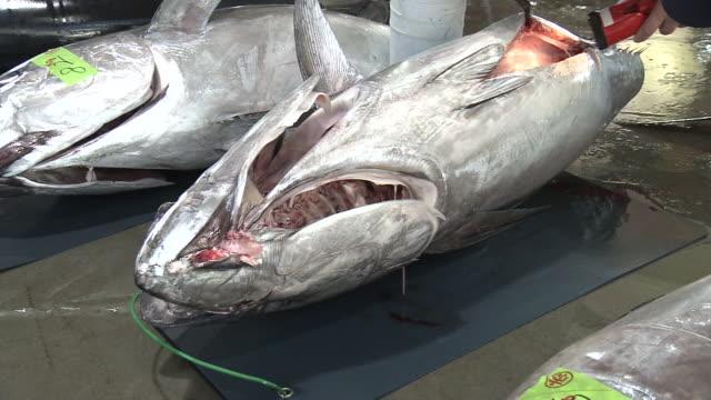 close-up, checking a tuna at fish market, miyagi, japan - auction stock videos & royalty-free footage