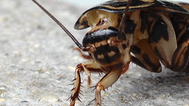close-up cockroach head - cockroach stock videos & royalty-free footage