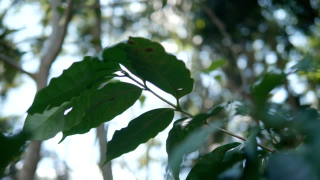 close-up coffee tree. - roasted stock videos & royalty-free footage