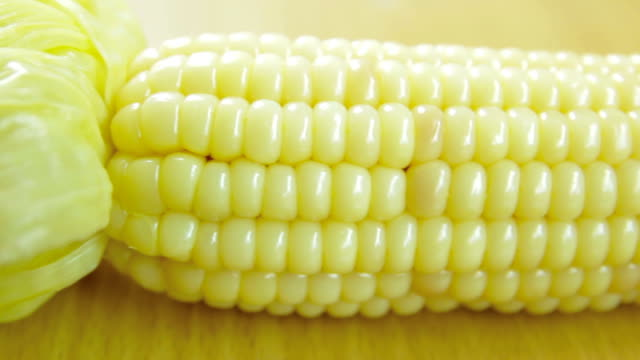 close-up corn - monoculture stock videos & royalty-free footage