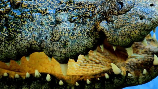 Close-up Crocodile teeth