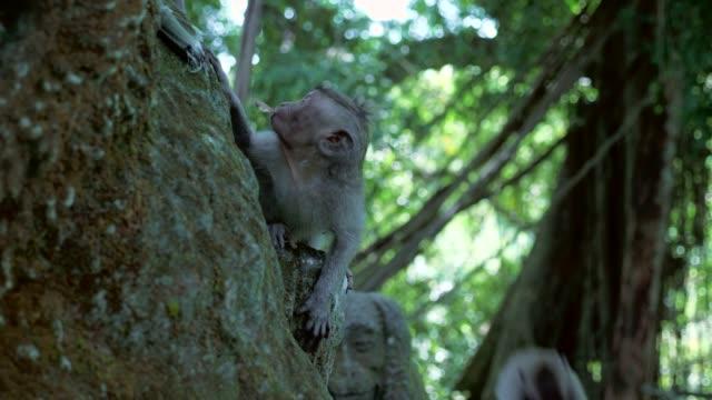 Close-up: Cute Monkeys Climbing On Monkey Statue