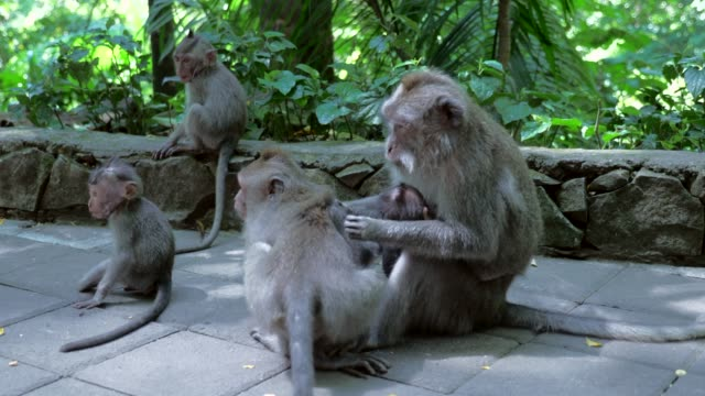 close-up: cute monkeys playing and grooming each other - altri temi video stock e b–roll