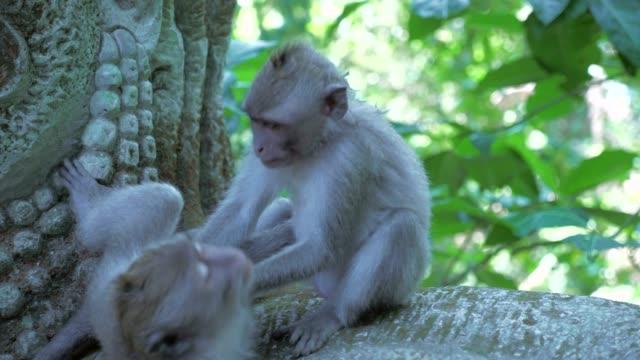 Close-up: Cute Monkeys Playing on Stone Statue