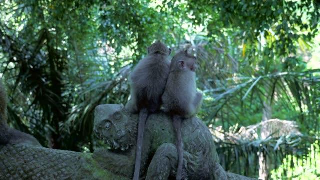close-up: cute monkeys sitting on monkey statue - ubud stock videos & royalty-free footage