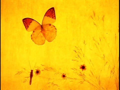 close-up dried orange butterfly decorating yellow lampshade - lamp shade stock videos and b-roll footage