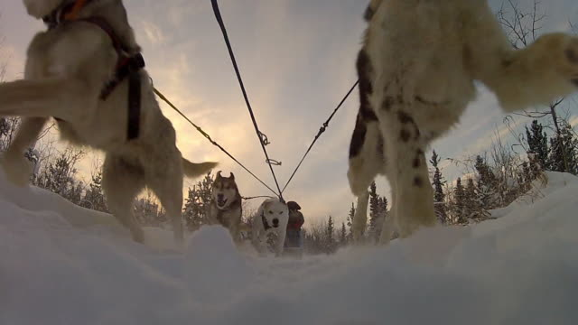 Close-up, extremely low-angle static shot of husky dogs pulling a sled through a snowy forest, engulfing the camera in snow.