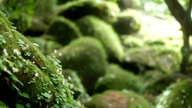 Close-up ferns