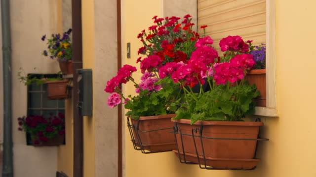 close-up: flowers in a windowsill - ledge stock videos & royalty-free footage