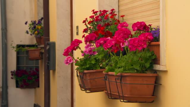 close-up: flowers in a windowsill - ゼラニウム点の映像素材/bロール