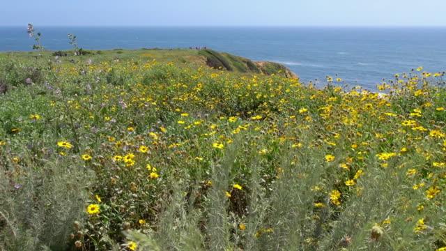 close-up: flowers of palos verdes california - palos verdes stock videos & royalty-free footage