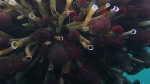 close-up: forest of tube worms flowing back and forth - sea worm stock videos & royalty-free footage