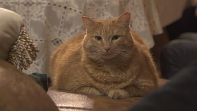 vídeos de stock, filmes e b-roll de close-up: ginger cat sitting at home - lake baikal, russia - olhos verdes