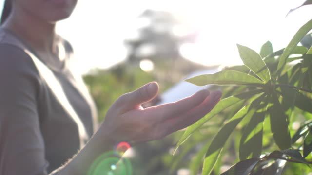 vídeos y material grabado en eventos de stock de primer plano mano de agricultor usando una tableta digital en el campo - grano planta