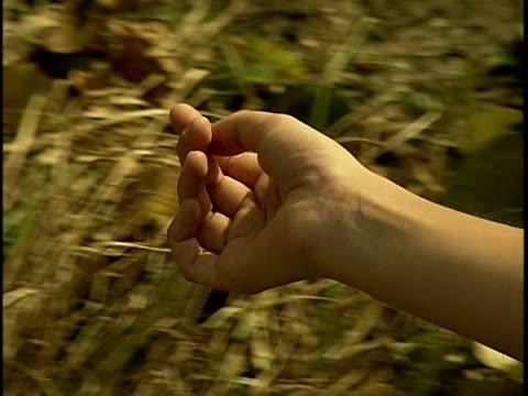 vídeos y material grabado en eventos de stock de close-up hand of young woman floating above bushes - sólo mujeres jóvenes