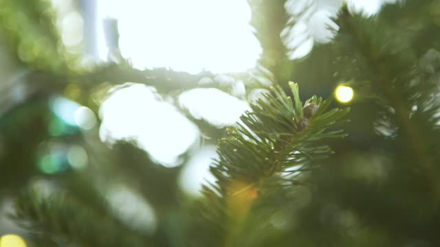 close-up handheld shot of christmas tree at home on sunny day - christmas tree stock videos & royalty-free footage