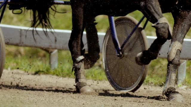 closeup harness racing (slow motion) - gambling stock videos & royalty-free footage