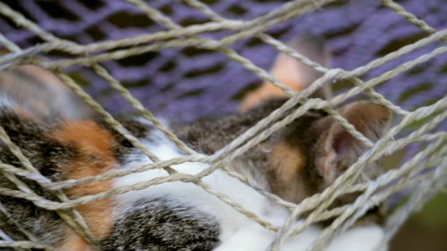 close-up: kitten lying in fishnet hammock - fishnet stock videos and b-roll footage