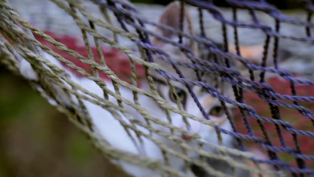close-up: kitten relaxing in fishnet hammock - fishnet stock videos and b-roll footage