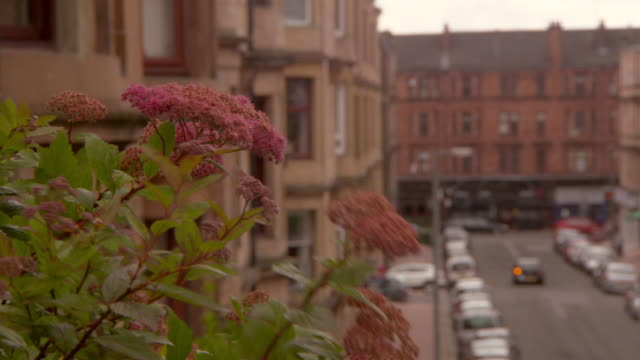close-up lockdown shot of flowering plant against residential buildings in city - glasgow, scotland - glasgow stock videos & royalty-free footage