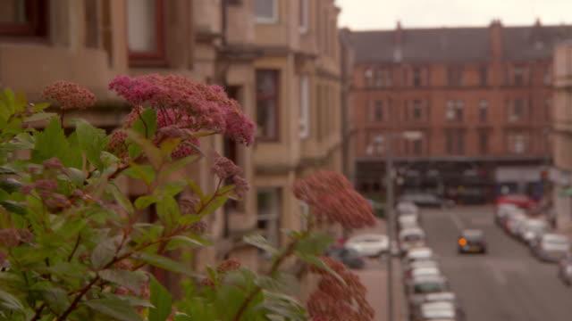 vídeos de stock e filmes b-roll de close-up lockdown shot of flowering plant against residential buildings in city - glasgow, scotland - glasgow escócia