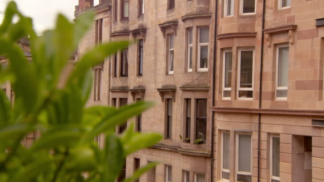 close-up lockdown shot of green plant against residential building in town - glasgow, scotland - スコットランド グラスゴー点の映像素材/bロール