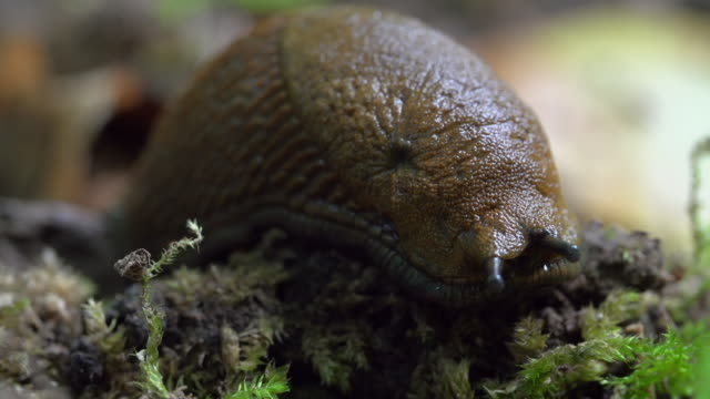 close-up lockdown shot of mollusc on small plants in forest - steigerwald, germany - mollusc stock videos & royalty-free footage