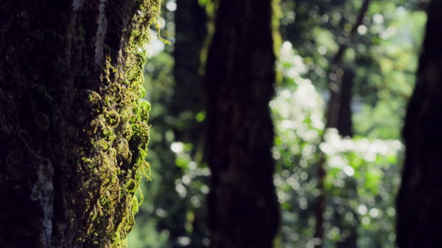 close-up: moss on a tree (shot on red) - moss stock videos & royalty-free footage