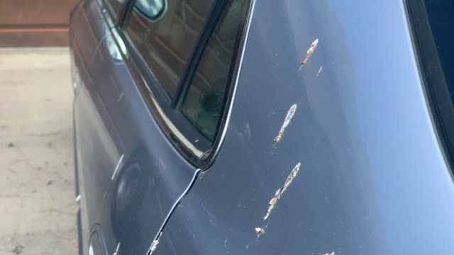close-up moving downward shot of an incredible amount of bird droppings on the side of a car parked under a tree - driveway stock videos & royalty-free footage