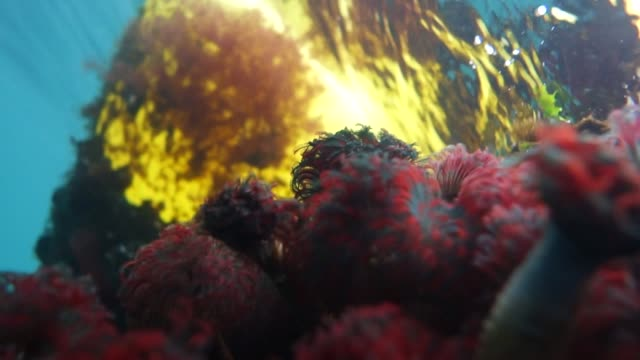 stockvideo's en b-roll-footage met close-up: mussels and tube worms on coral - kokerworm
