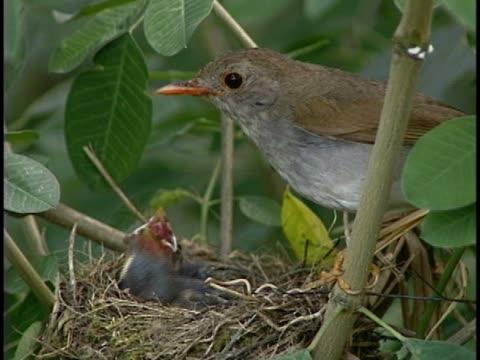 vídeos y material grabado en eventos de stock de close-up of a bird feeding its young - grupo pequeño de animales