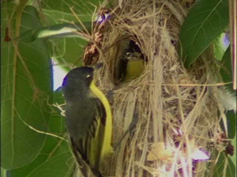 vídeos de stock e filmes b-roll de close-up of a bird feeding its young - boca de animal