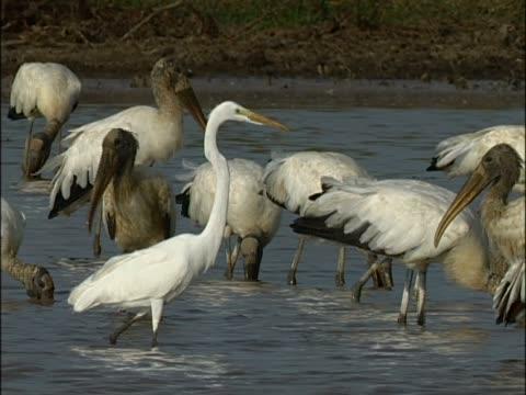 close-up of a bird in water - water bird stock-videos und b-roll-filmmaterial