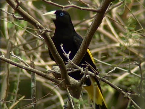 vidéos et rushes de close-up of a bird perching on a branch - membre partie du corps