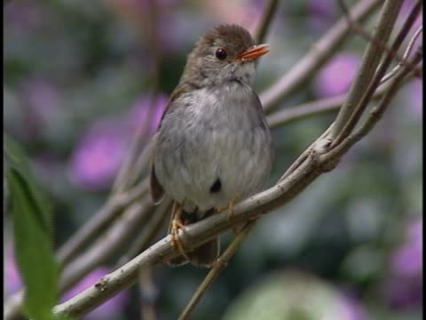 close-up of a bird perching on a branch - perching stock videos & royalty-free footage