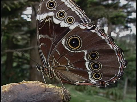 close-up of a butterfly - animal wing stock videos & royalty-free footage