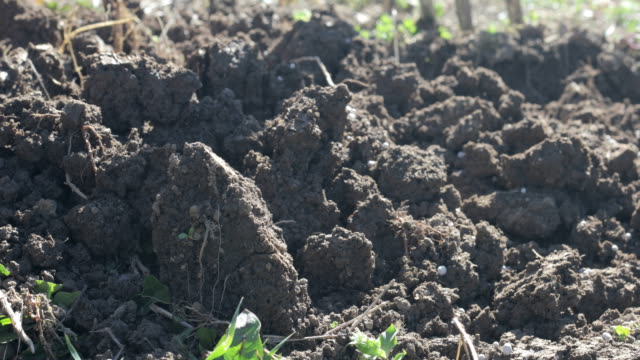 close-up of a farmer adding artificial fertilizer to the soil - imitation stock videos & royalty-free footage