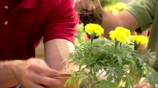 Close-up of a father and son?s hands as they plant flowers in a pot.