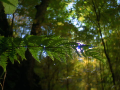 close-up of a fern frond - sparklondon stock videos and b-roll footage