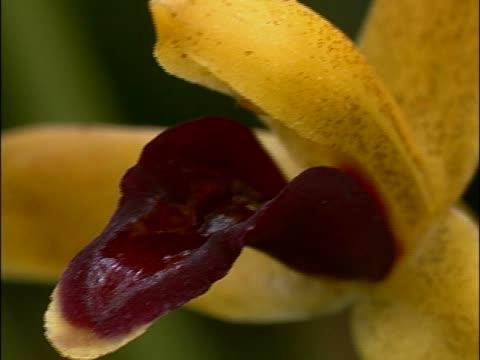 stockvideo's en b-roll-footage met close-up of a flower vibrating - meeldraad