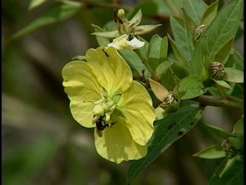 stockvideo's en b-roll-footage met close-up of a flower - meeldraad