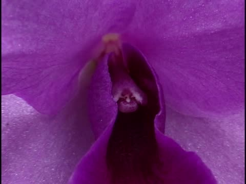 stockvideo's en b-roll-footage met close-up of a flower - uitfaden
