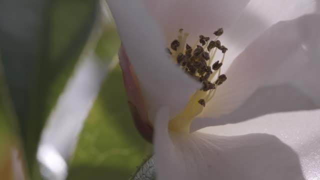 Close-up of a flower's stamen, UK.
