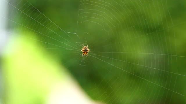 vídeos y material grabado en eventos de stock de 4k close-up of a garden spider sitting in the center of a web - simbiosis