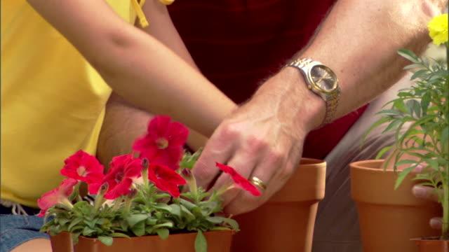 close-up of a girl?s hands and a man?s hands replanting a flower in a pot. - blomrabatt bildbanksvideor och videomaterial från bakom kulisserna
