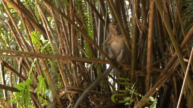 close-up of a hiding monkey, rainforest island - tropical bush stock videos & royalty-free footage