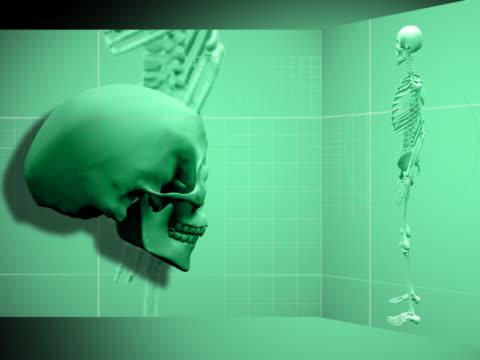 close-up of a human skull spinning - 鼻腔点の映像素材/bロール